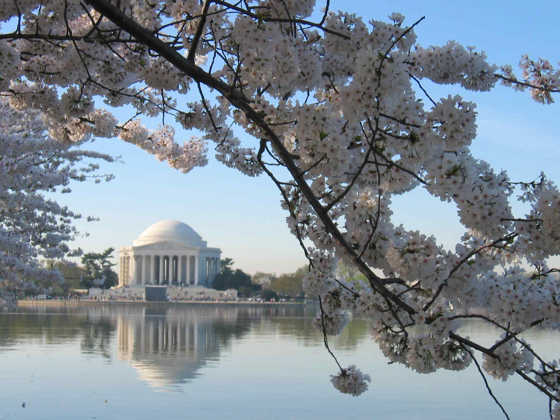 jefferson-memorial-at-cherry-blossom-time.JPG